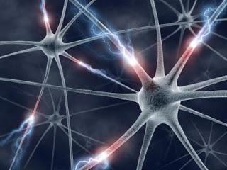 neural network rotator